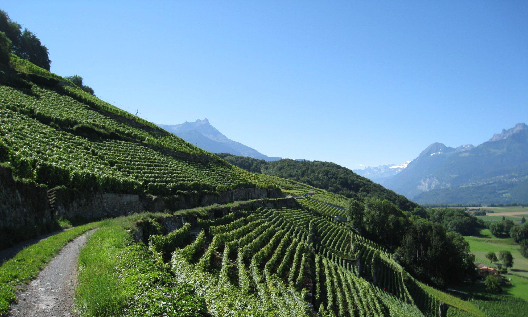 Les vins d'Ollon